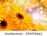 orange gerber flowers on color... | Shutterstock . vector #235476661