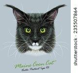 Maine Coon Cat Animal Cute Fac...