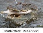 West African Crocodile ...