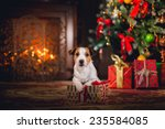 Dog Jack Russell Terrier....
