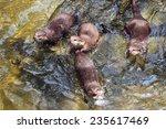 Otter Swimming.