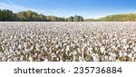 wideangle shot of cotton field | Shutterstock . vector #235736884