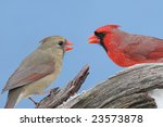 pair of northern cardinals ... | Shutterstock . vector #23573878
