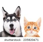 Stock photo little red kitten and husky puppy isolated on white 235820671