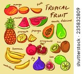 tropical fruit set vector... | Shutterstock .eps vector #235832809