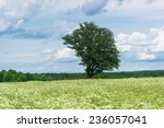 scenic view plain nature  | Shutterstock . vector #236057041