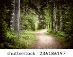 Path Winding Through Lush Green ...