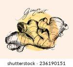ginger root | Shutterstock .eps vector #236190151