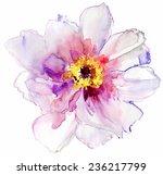 luxurious white peony flower...   Shutterstock .eps vector #236217799