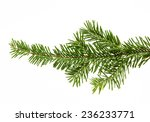 Fir Branch Isolated On White...
