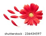 Red Daisy Flower With Some...