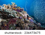 Small photo of Glassfish (ambassis) swimming around a croal and sponge covered bommie in a beautiful aquarium like coral sea landscape in the Indian Ocean, Zanzibar
