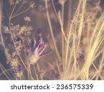 beautiful purple dry flower... | Shutterstock . vector #236575339