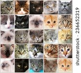 cute cat faces collage | Shutterstock . vector #236652319
