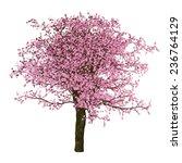 Sakura Tree  Cherry  Isolated