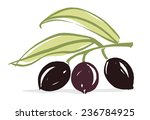 olive branch with olive leaves... | Shutterstock .eps vector #236784925