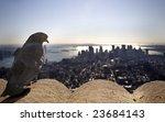 Pigeon Overlooking Manhattan...