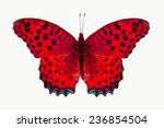 Stock photo beautiful red butterfly isolated on white background 236854504