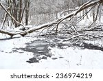 The Winter Creek In Snowy Forest