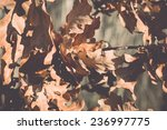 Autumn Gold Colored Leaves In...
