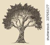 vintage olive engraved... | Shutterstock .eps vector #237052177
