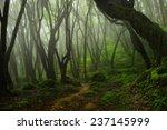 bosque de nepal   Shutterstock . vector #237145999