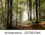 Autumnal Forest In The...
