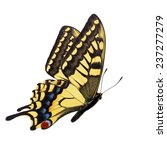 beautiful yellow butterfly ... | Shutterstock . vector #237277279