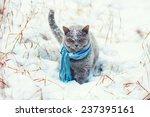 Cat Wearing Scarf Walking On...