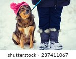 Stock photo dog wearing knitted hat with pompom walking with owner outdoor snowy in winter 237411067