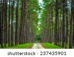 pine agroforestry. boa keaw... | Shutterstock . vector #237435901
