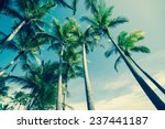 retro image of palm trees low... | Shutterstock . vector #237441187