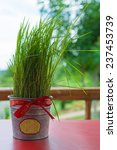 Potted Grass Ribbons  Christma...