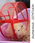 close up of hamster in wheel | Shutterstock . vector #237471634