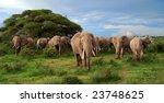 A Big Herd Of Elephants In The...
