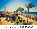 palm alley on egyptian beach ... | Shutterstock . vector #237558169