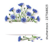 Bunch Of Blue Cornflowers With...
