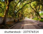 Oak Trees Along Magnolia Avenue ...