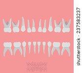 teeth morphology low poly dental | Shutterstock .eps vector #237583237
