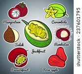 exotic fruit set colorful... | Shutterstock .eps vector #237601795