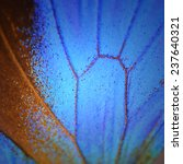 Macro Close Up Of Blue...
