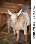 barn yard farm animal baby... | Shutterstock . vector #23766761