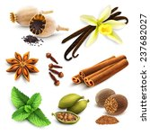 herbs and spices decorative... | Shutterstock . vector #237682027