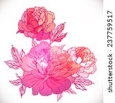 peony  vintage hand drawing... | Shutterstock .eps vector #237759517