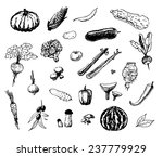 hand drawn vegetables | Shutterstock .eps vector #237779929