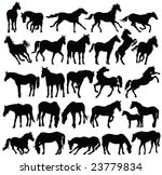 horses silhouette collection  ... | Shutterstock .eps vector #23779834