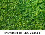 green leaves wall background | Shutterstock . vector #237812665