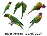 set of rainbow lorikeet birds... | Shutterstock . vector #237870289