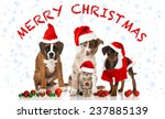 Stock photo merry christmas 237885139