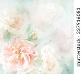 Stock photo pink roses sweet soft color background beautiful flowers made with color filters 237916081